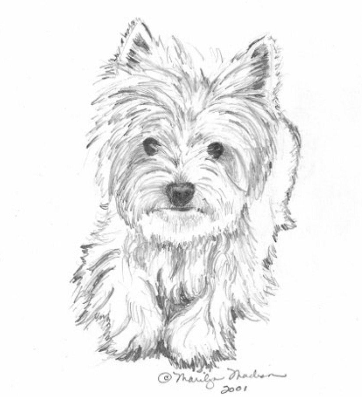 Great Yorkie Sketch Pencil Drawings Animal Drawings Drawings