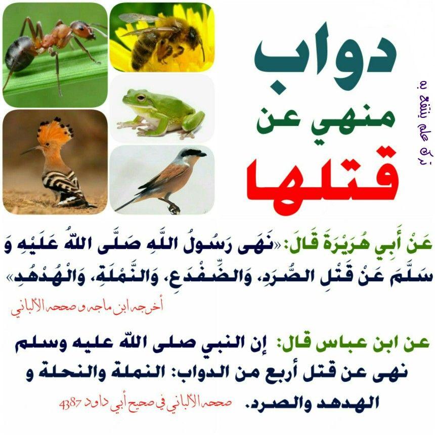 دواب منهي عن قتلها Ahadith Words Hadith