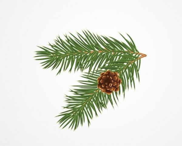 Realistic Pine Bough with Cone Vector Graphic - http://www.welovesolo.