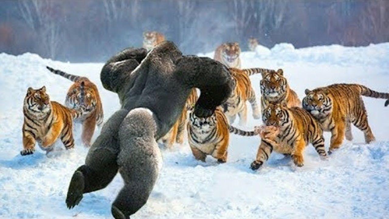 Thế giới động vật và những trận đại chiến đáng xem 03