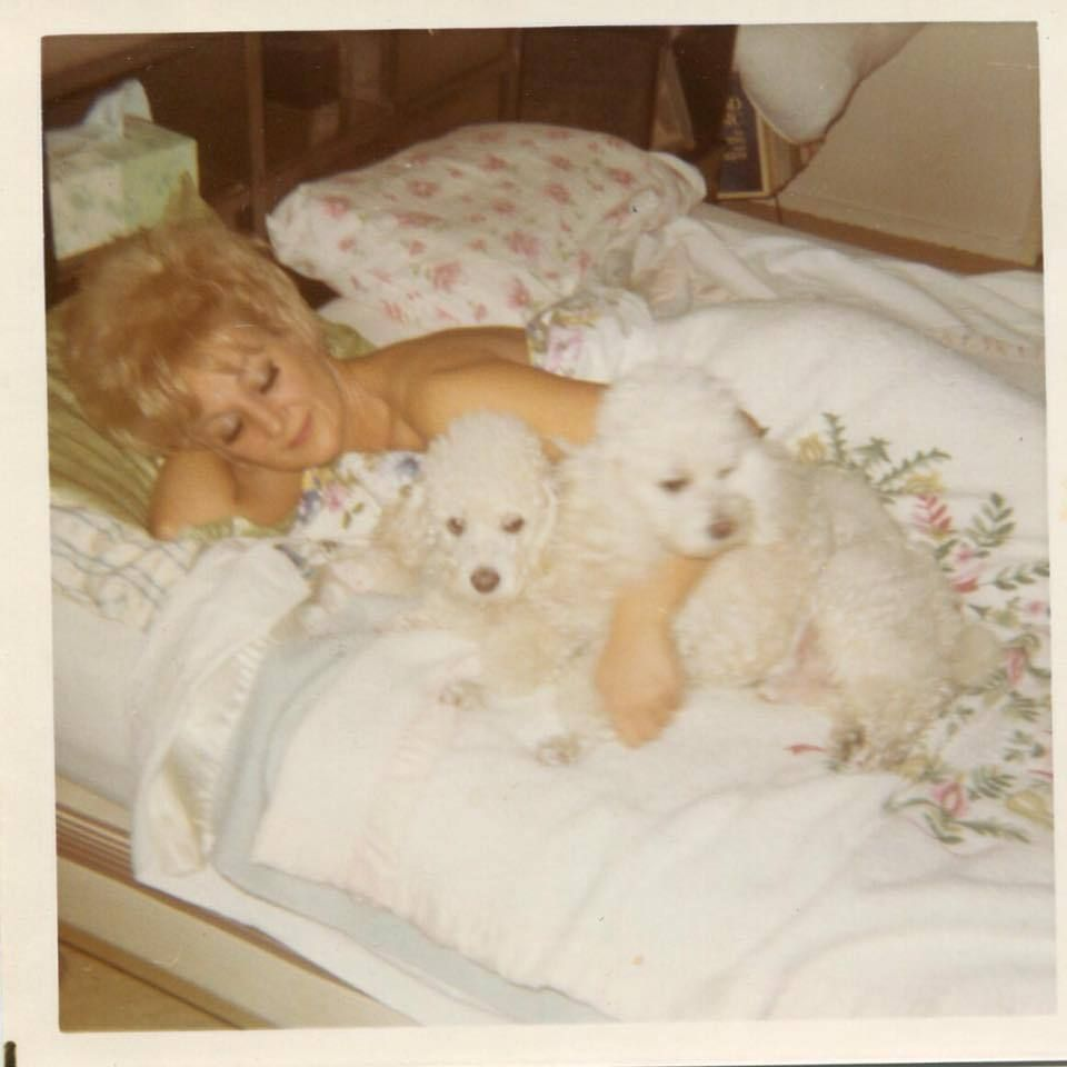 Pin By Jlefevre On Dogs Poodle Animals Retro Photo