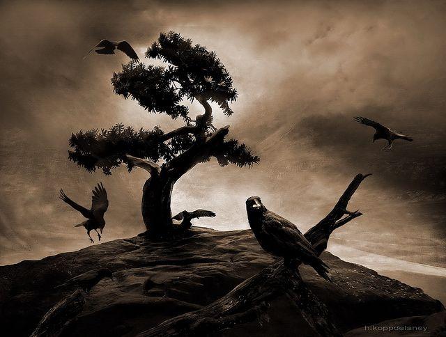 The Seven Raven by h.koppdelaney, via Flickr