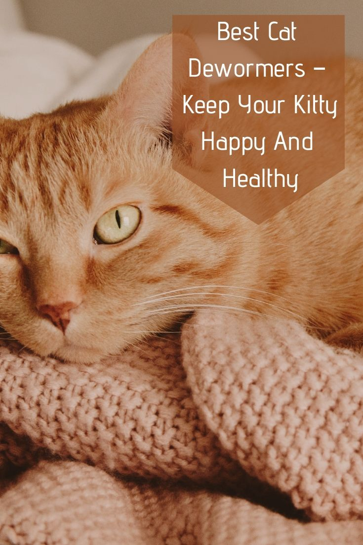 Keeping Our Precious Kitties Happy And Healthy Is Not Easy We All