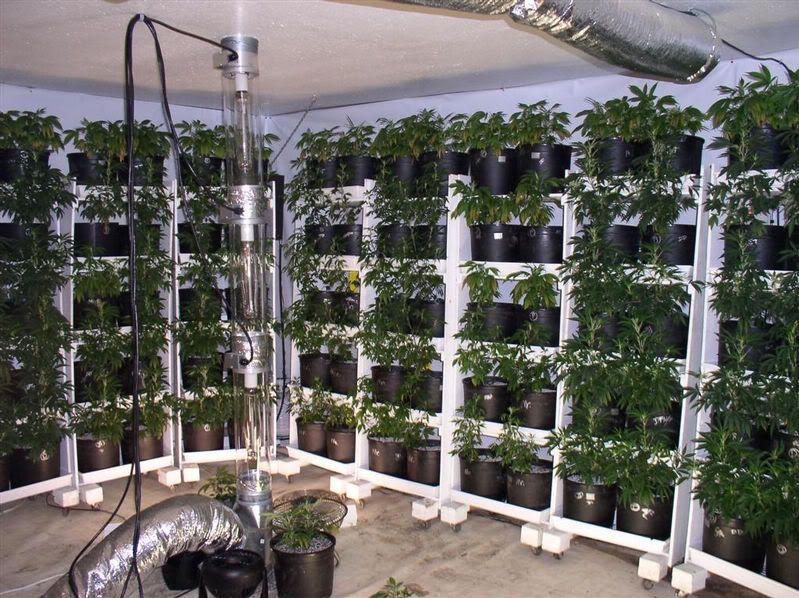 Pin By Cannabis Connect On Cannabis    Hydroponics