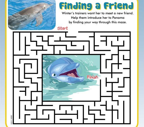dolphin tale print and colour sheets