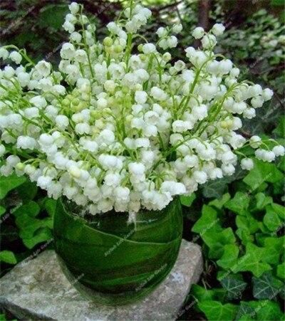 100 Pcs Bell Orchid Bonsai Plants Lily Of The Valley Flower Flores Multi Colored Orchids Campanula Bonsai Lily Of The Valley Flowers Plants Beautiful Gardens