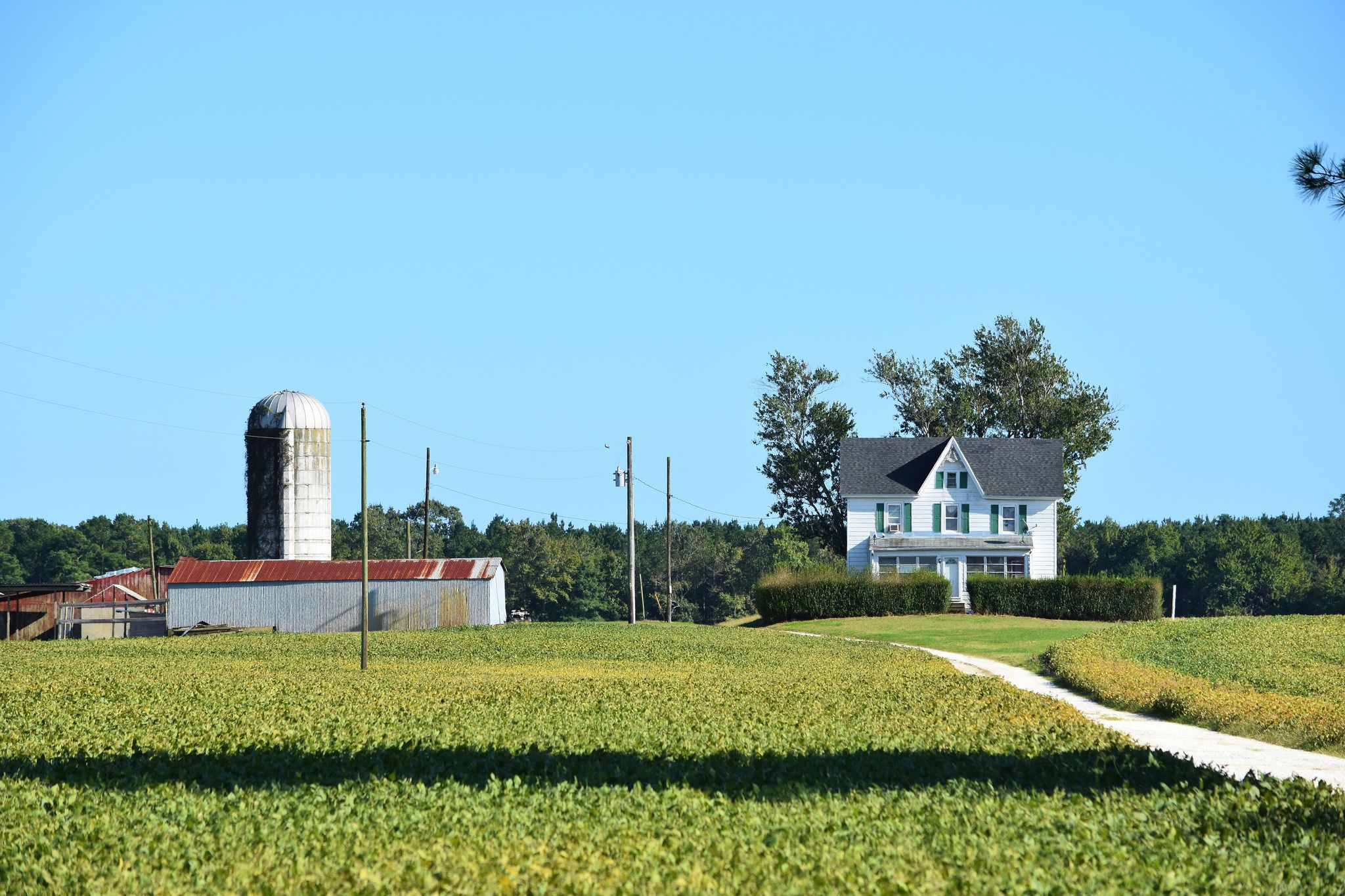 Farm rt 113 3 miles north of snow hill maryland