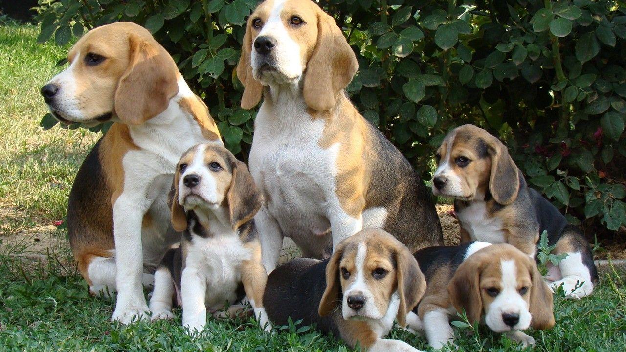 Фото собаки со щенками (с изображениями) | Фото собак ...