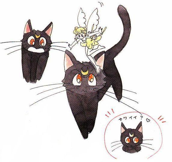 black cat & fairy