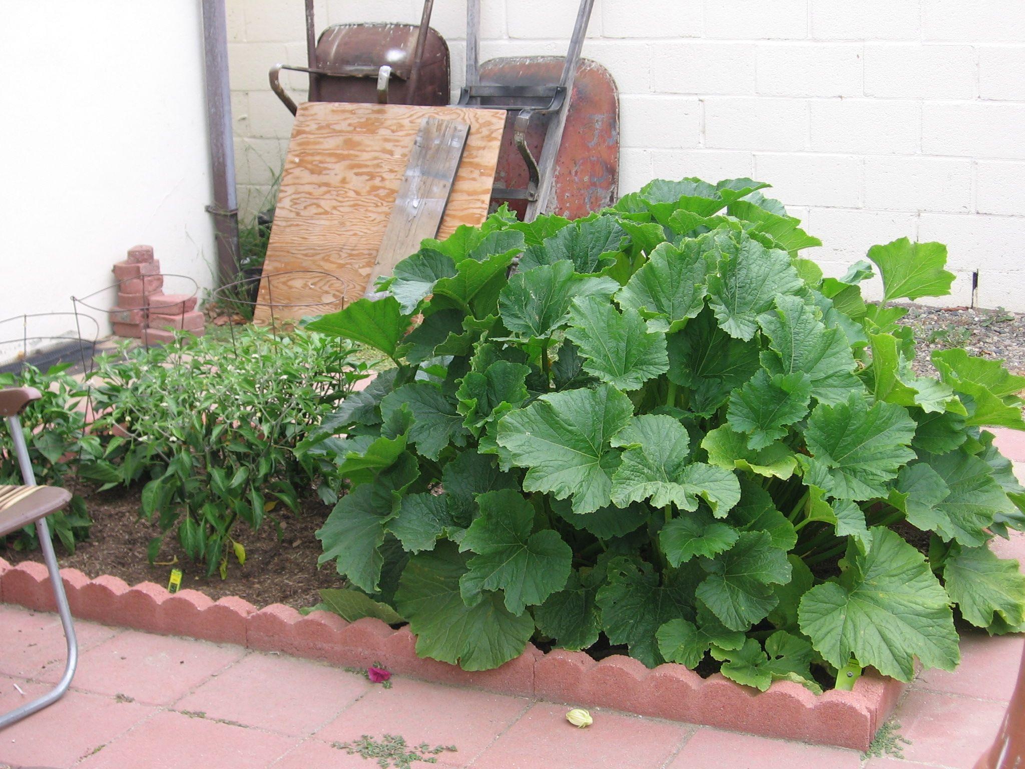 vegetable garden in our backyard fruit u0026 vegetable gardens