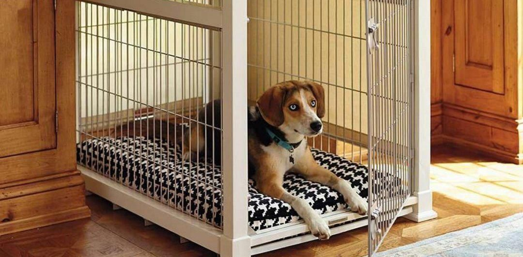 Here S A Look At The Best Dog Crates Essential For Every Dog