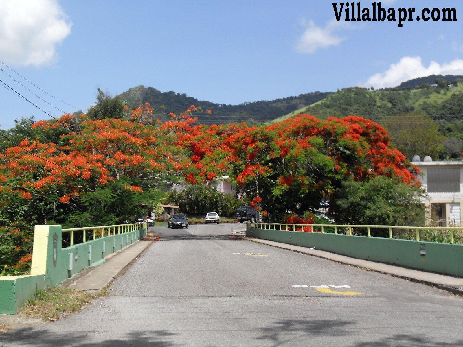 Image detail for -municipio de villalba puerto rico ...