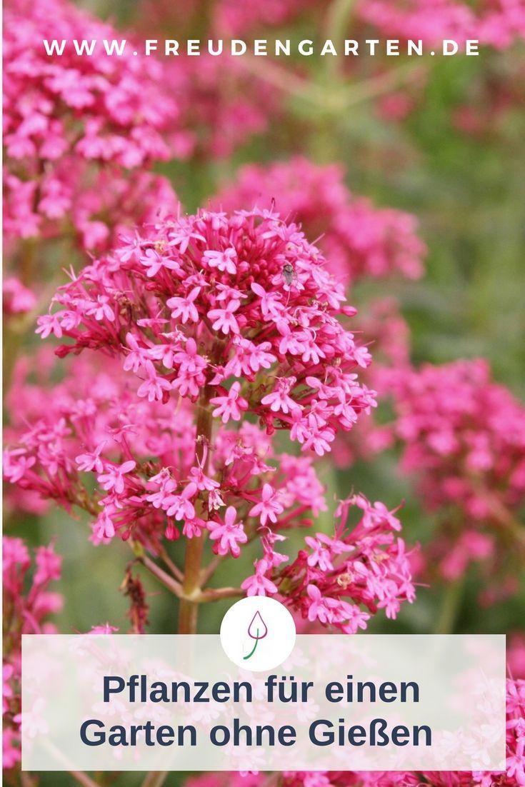 Pflanzen für trockene und sonnige Standorte #pflegeleichtepflanzen