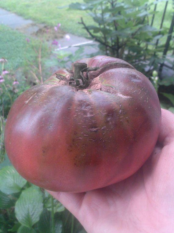Cherokee Purple Tomato Heirloom Tomato Seeds Delicious By 640 x 480