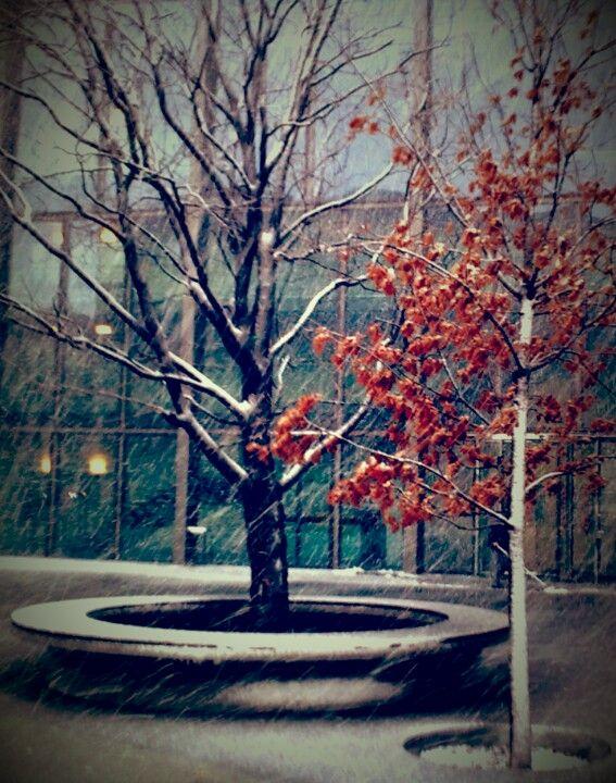 Nieve en BCN (2010)