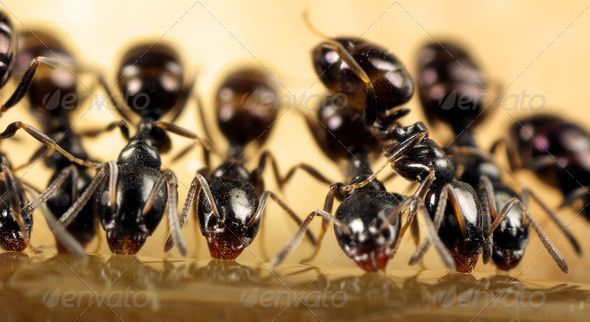 Ants Feeding With Images Ants Bees And Wasps Termite Control