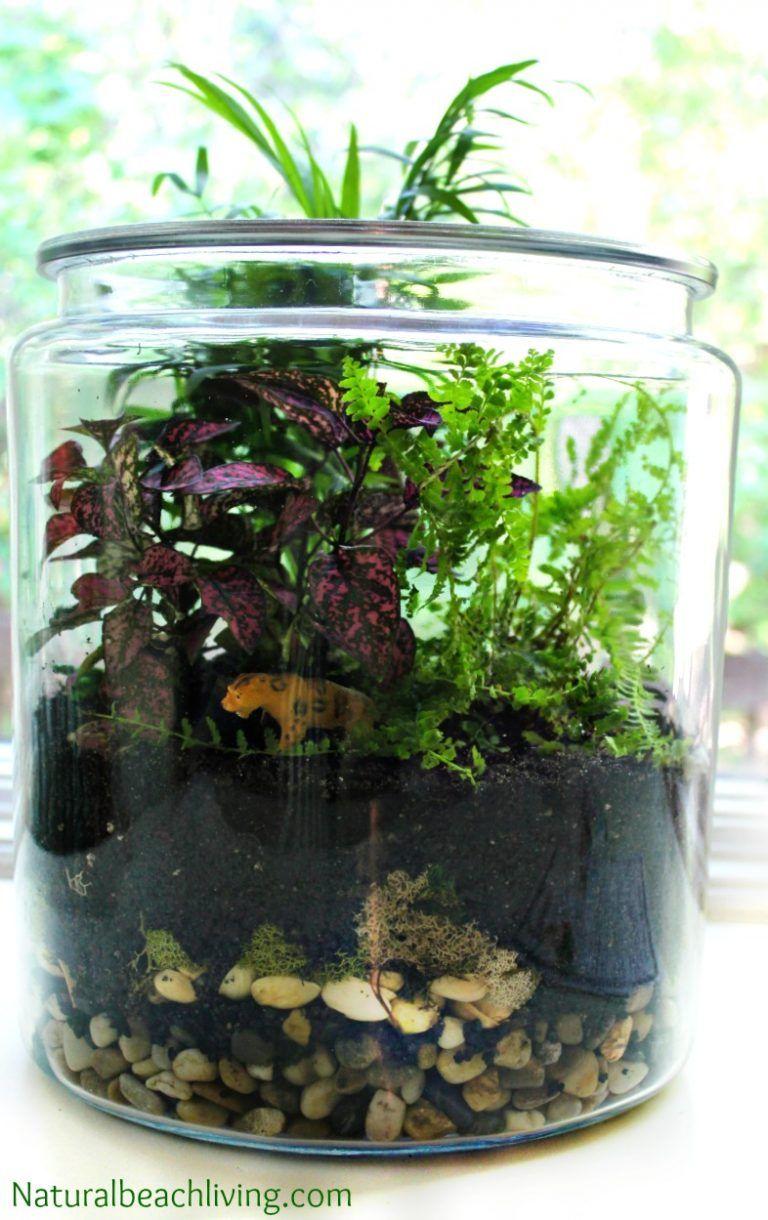 How To Make A Rainforest Terrarium With Kids Gardens Rainforest