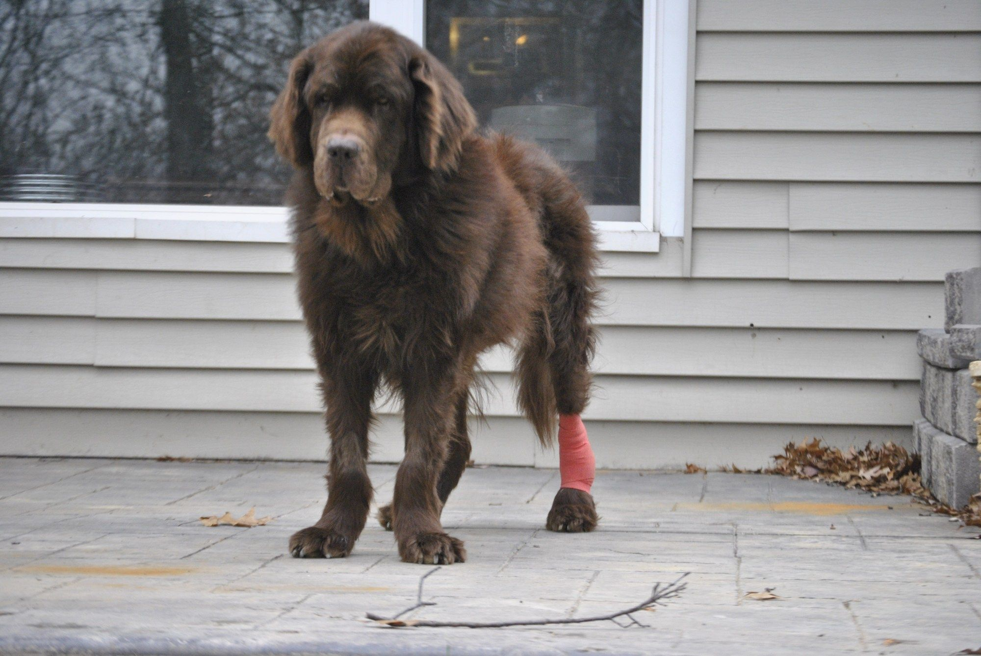 Stages Of Pressure Sores And Wound Healing In Dogs Soreness