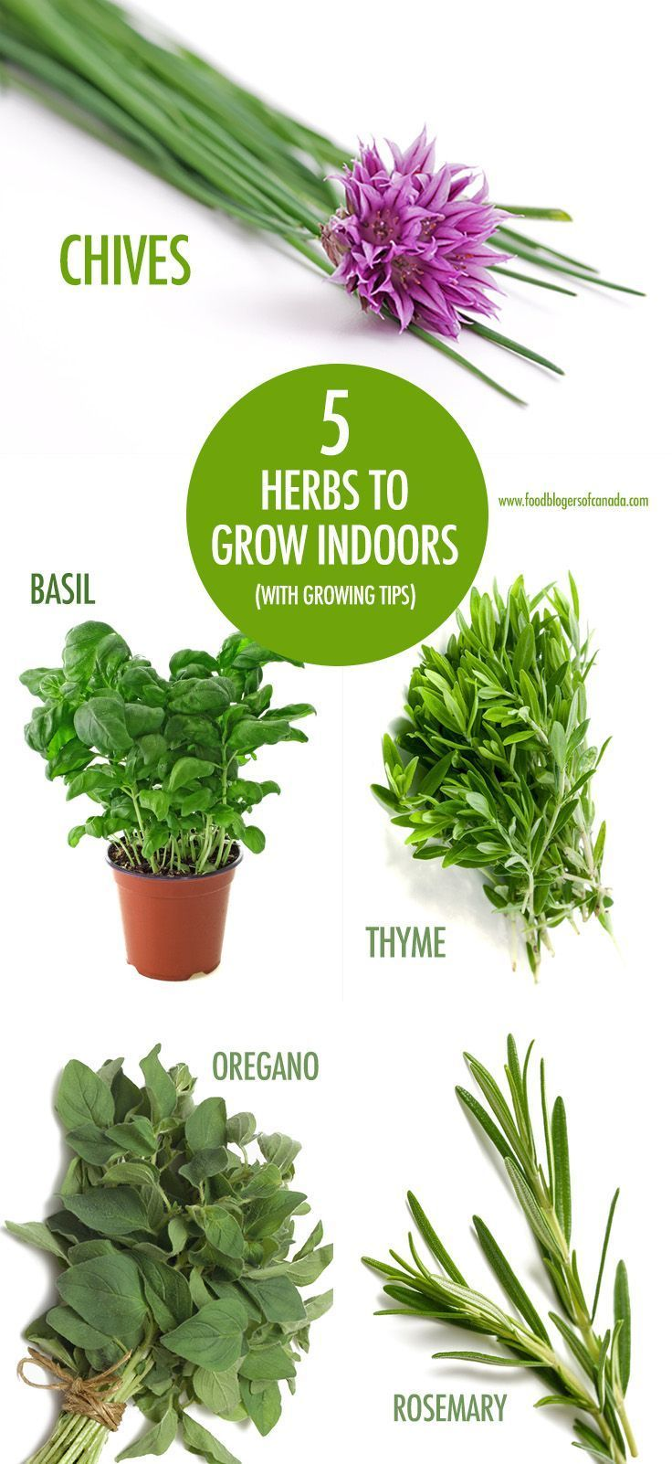 5 Herbs You Can Grow Indoors (with growing tips) | Growing ...