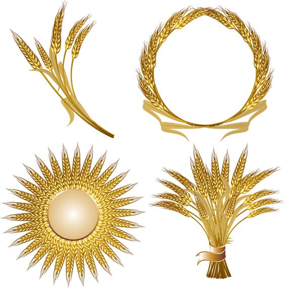 Golden Wheat Vector Wheat vector, Golden wheat, Sterling