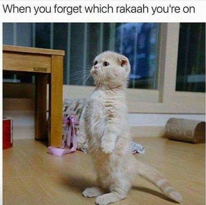14 Muslim Memes That Will Make You Laugh Till You Cry Laugh Till You Cry Stupid Funny Memes Funny Relatable Memes