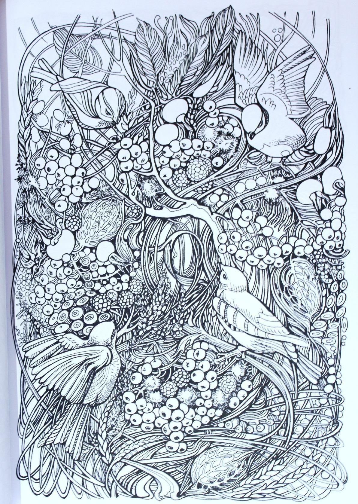 Amazon Manic Botanic Zifflins Coloring Book 9781523692057 Zifflin