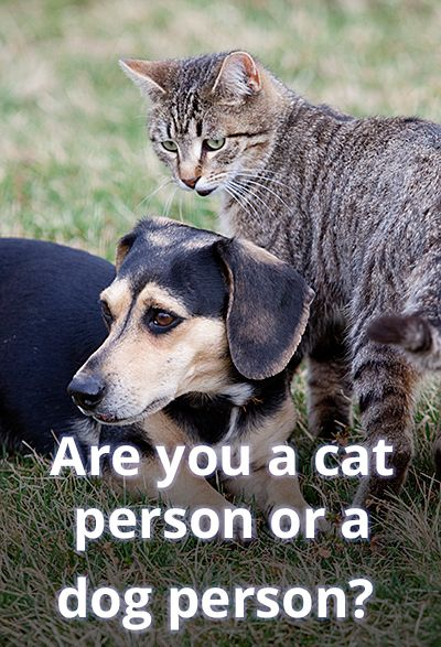 Are you a cat person or a dog person? Take our quiz