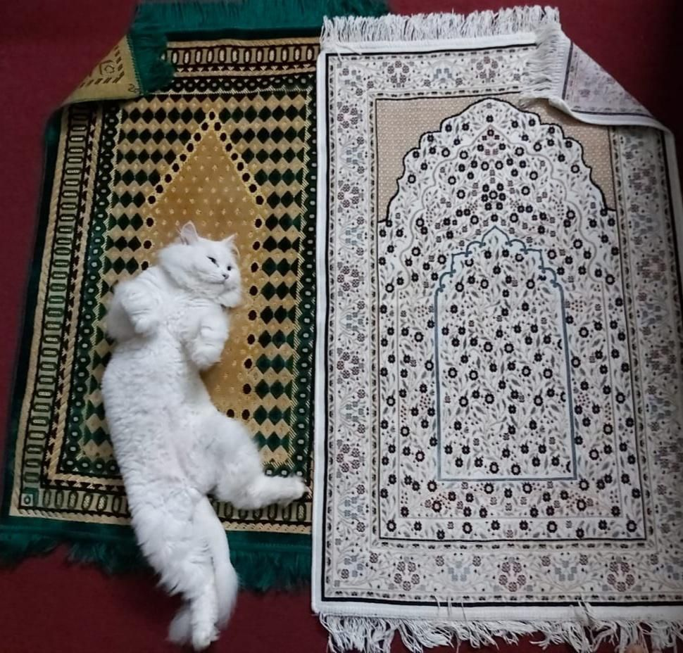 Always have to lay down two prayer mats as my cat