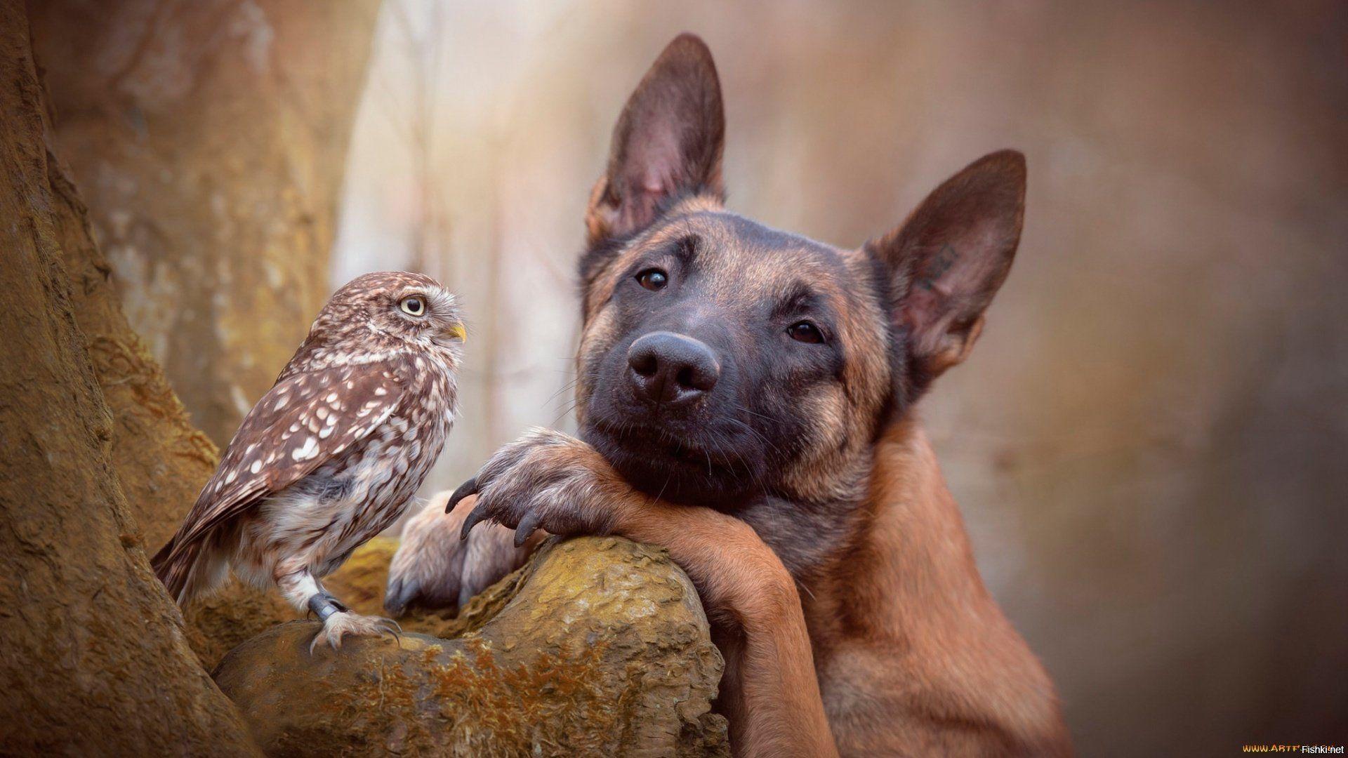 Дружба совы и собаки покорила миллионы сердец | Животные ...