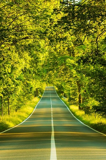 Road Nature HD Desktop Wallpaper Tree Forest Green