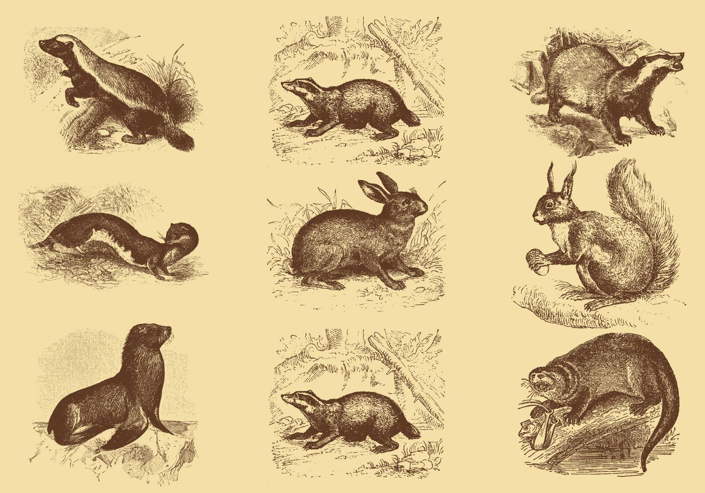Line Drawing Vector Graphics : Old style drawing mammal vectors ilustrações antigas pinterest