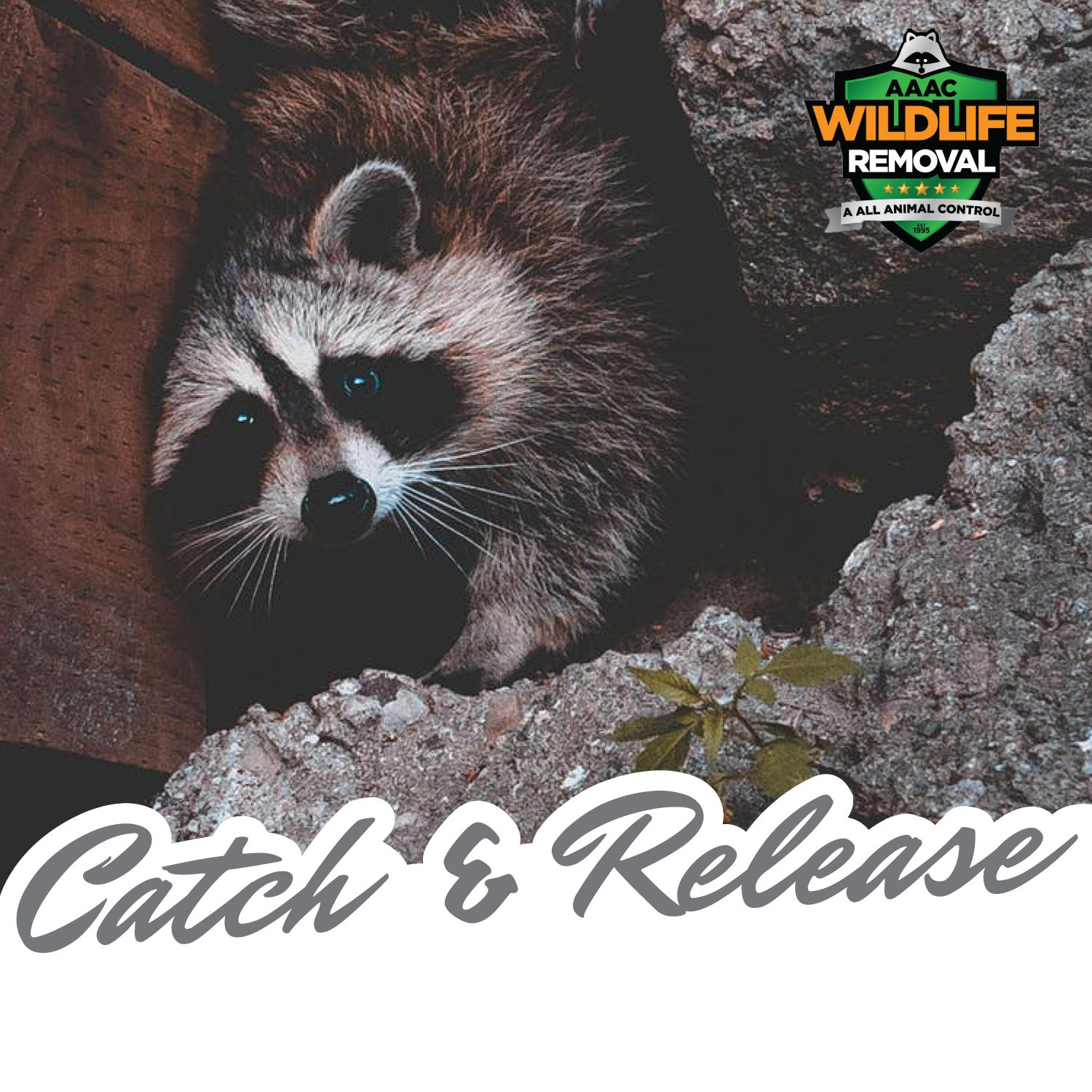 Aaac Wildlife Removal Of Madison Technicians Are Trained And Equipped To Clean Up All Waste Hazardous Waste Guano Droppings Animal Control Wildlife Madison