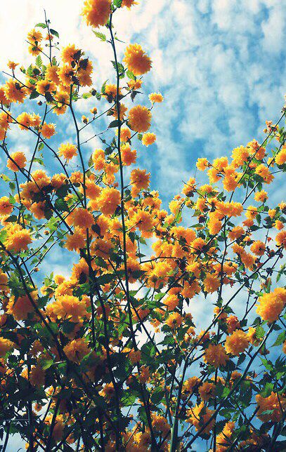 let there be light flower aesthetic beautiful flowers yellow aesthetic flower aesthetic