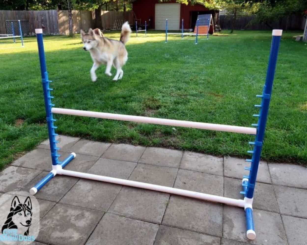 9 diy dog agility courses homemade agility obstacles for