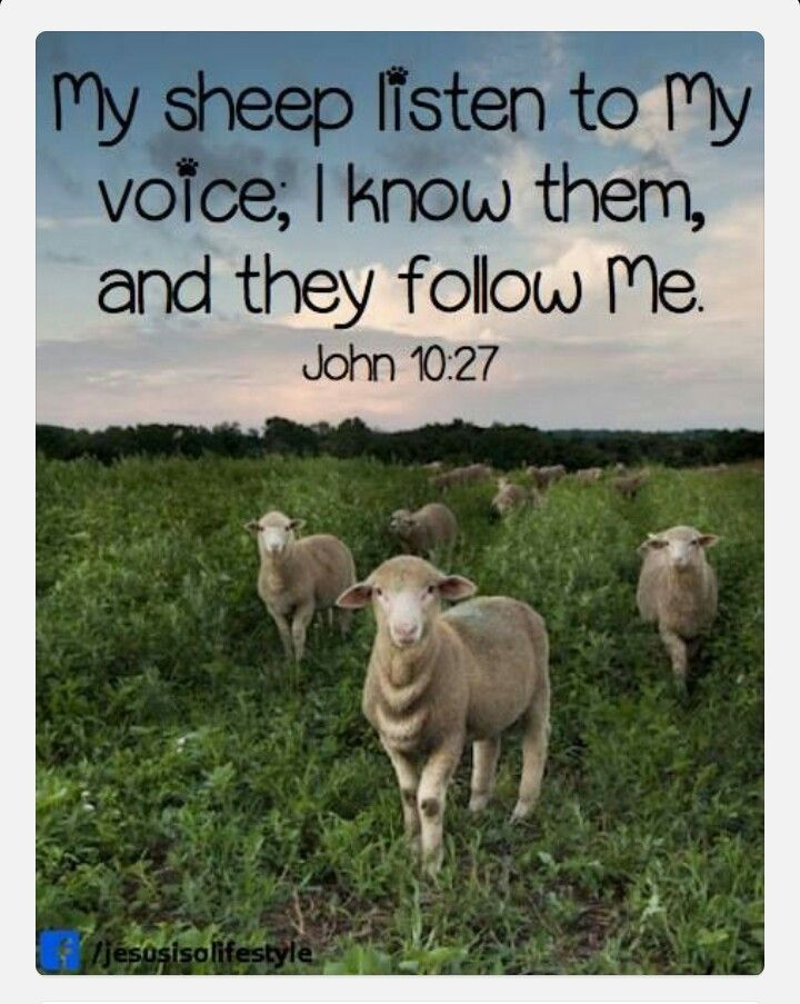 "LISTEN UP! They won't follow a stranger; they will run from him because they don't know his voice"" (John 10:5).  My sheep l… 