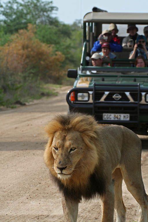 Parque Nacional Kruger . Un lugar para visitar y ver toda la vida salvaje en Sudáfrica.