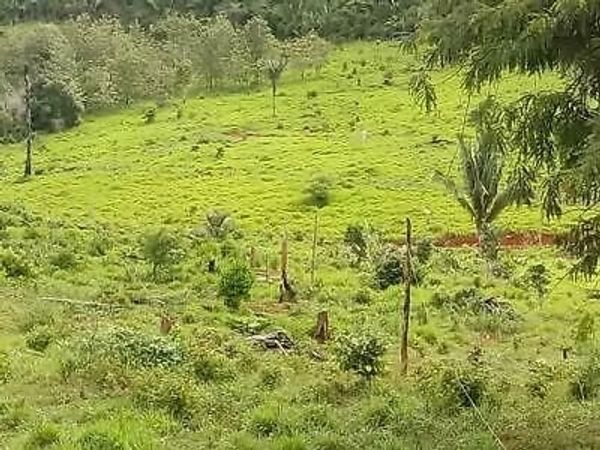 Brasilien 1000 Ha grosses Tiefpreis-Grundstück » Grundstücke, Bauplätze aus Guttet