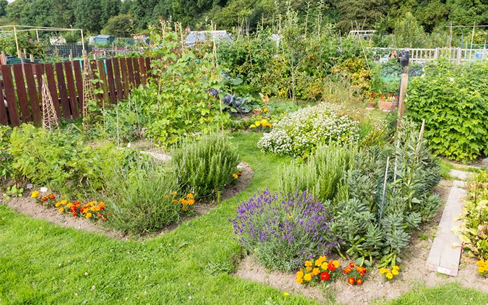 How to build a potager vegetable garden with herbs and for Fruit and vegetable garden design