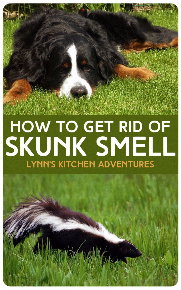 getting rid of skunk smell can be as simple as using a few common