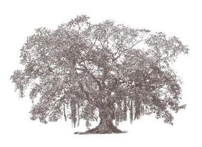 banyan tree images clip art google search tattoo artistry