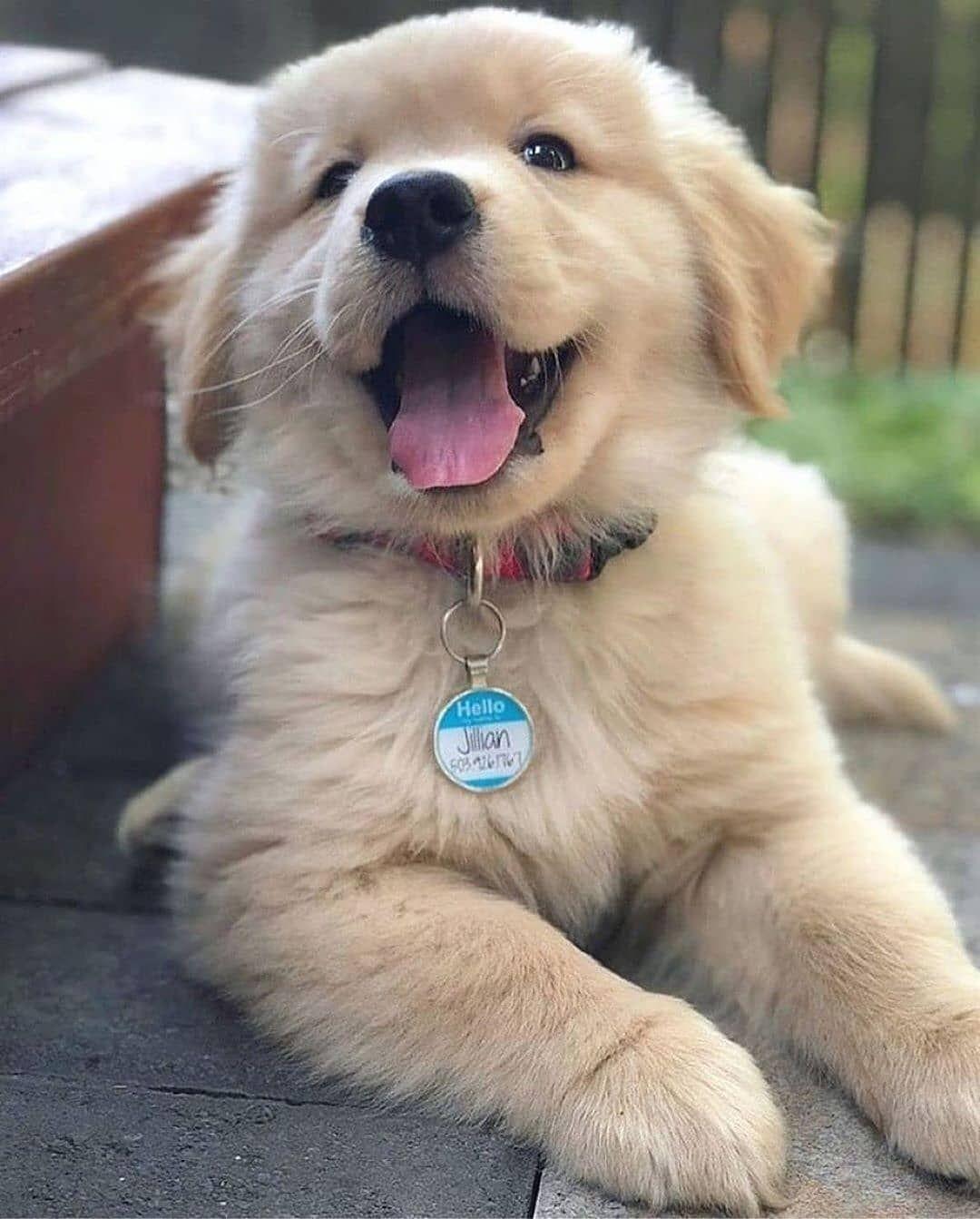 Meinhaustier Hundeliebe Hunde Spruche Zitat Hunde