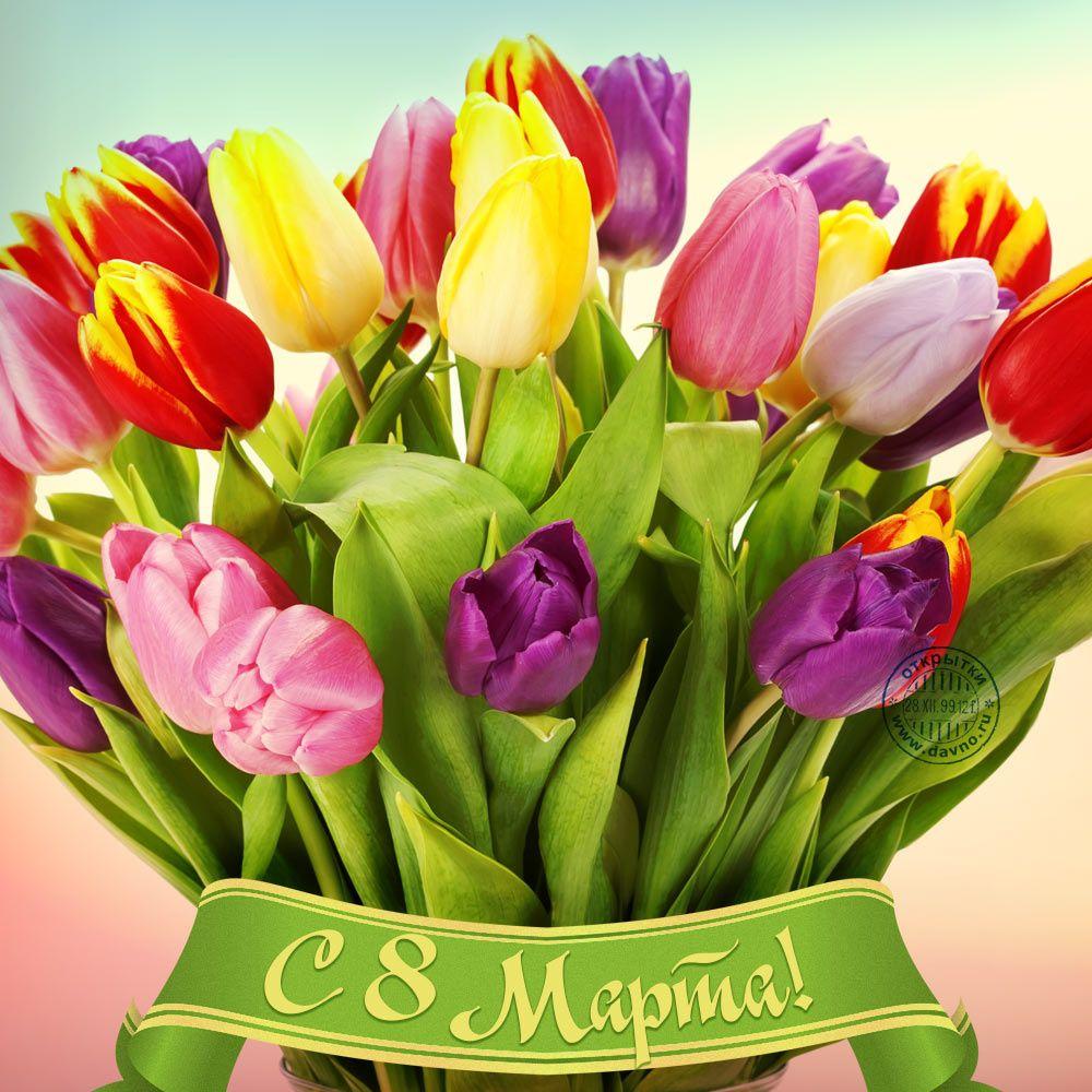 Написать, видео поздравление с тюльпанами