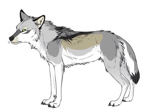 Pin by on wolves siberian huskies anime manga wolf find this pin and more on wolves siberian huskies anime manga wolf hybrids ccuart Choice Image