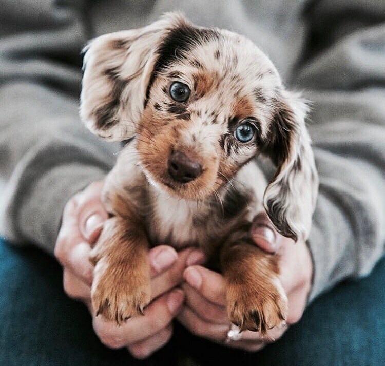 Photo of adorables cachorros – Perros # Perros # adorables # Perros