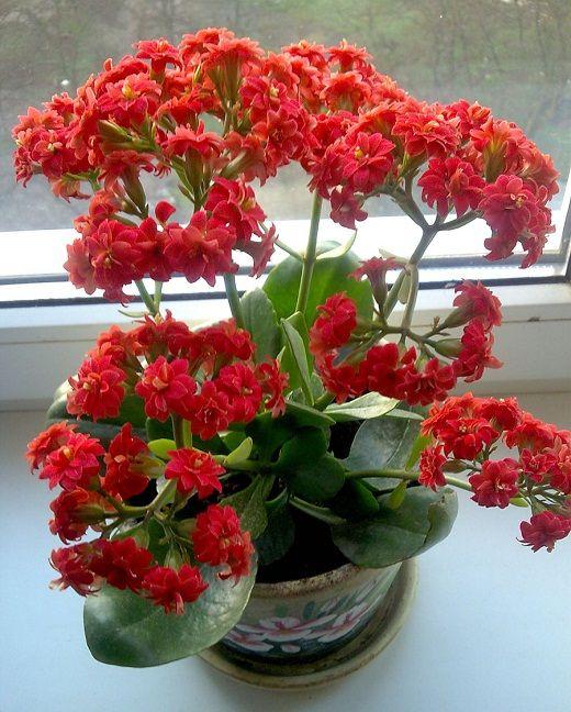 Живые комнатные цветы посмотреть розы минск купить