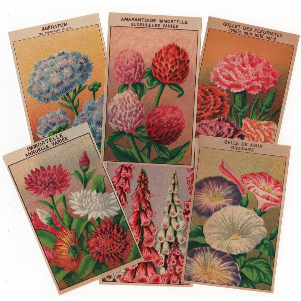 72 Vintage French Flower Seed Packet Labels All Different