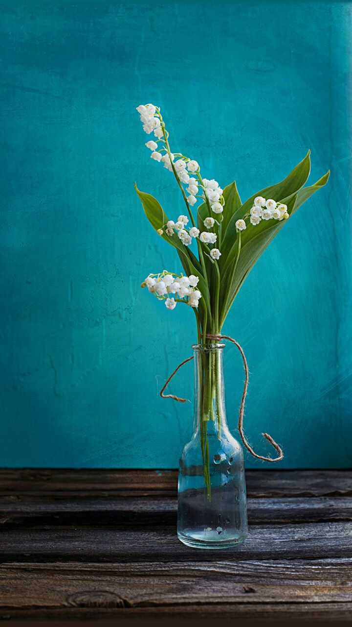 Pin By Rabyya Masood On Wallpapers Lily Vases Lily Of The