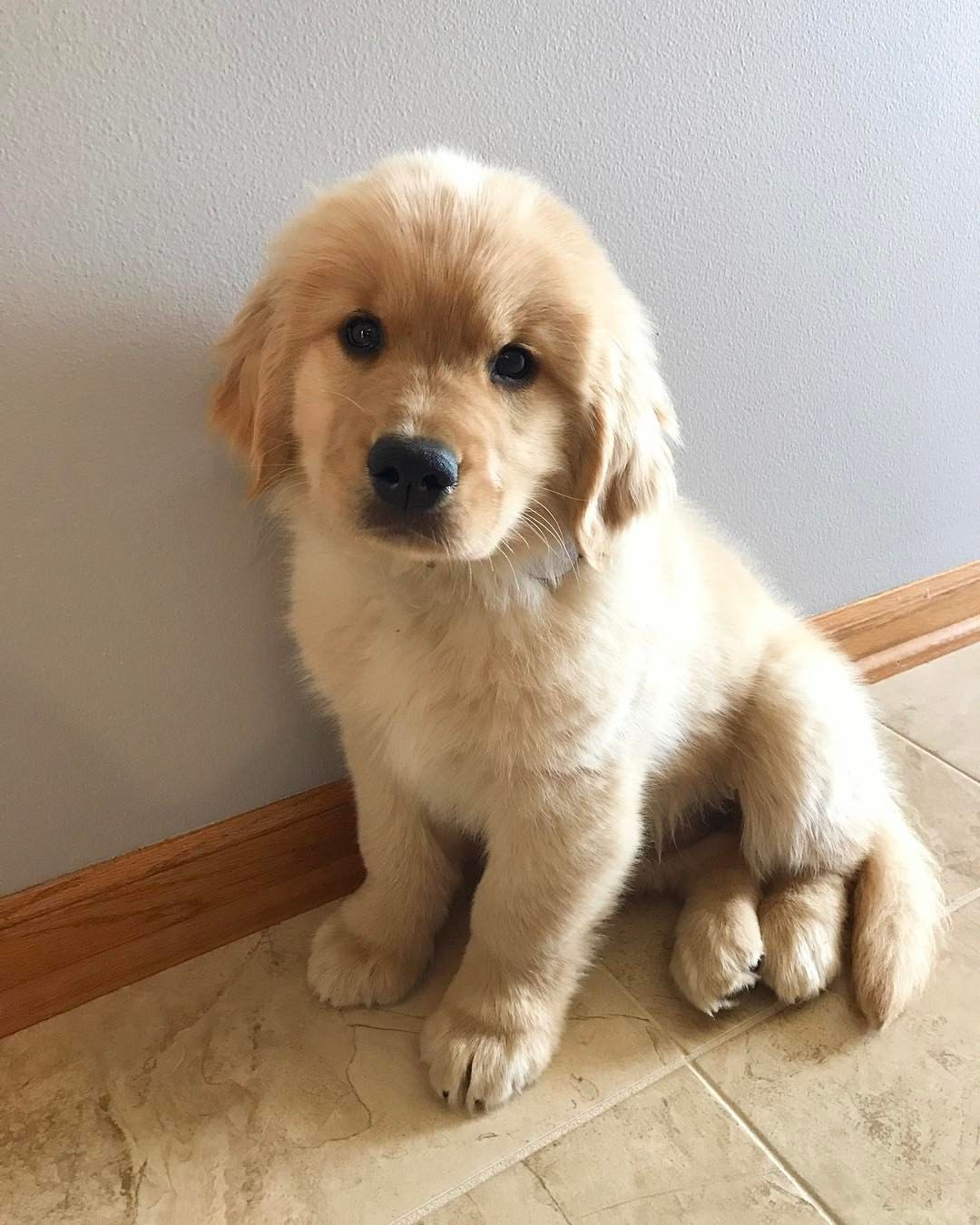 How To Have An Obedient And Happy Dog Puppies Cute Baby Animals