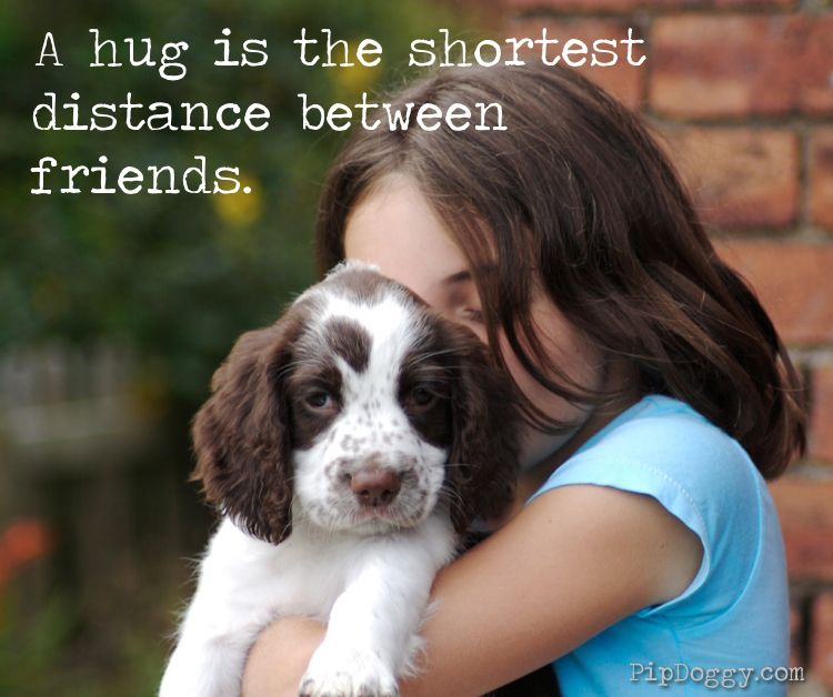 Dog Quotes Dog Sayings Best Friends Puppy And Little Girl Puppy Insurance Dog Care Puppy Care