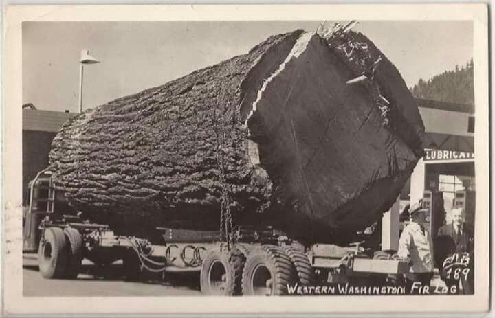 One huge log! | Logging Days | Timber logs, Tree logs, Old trees